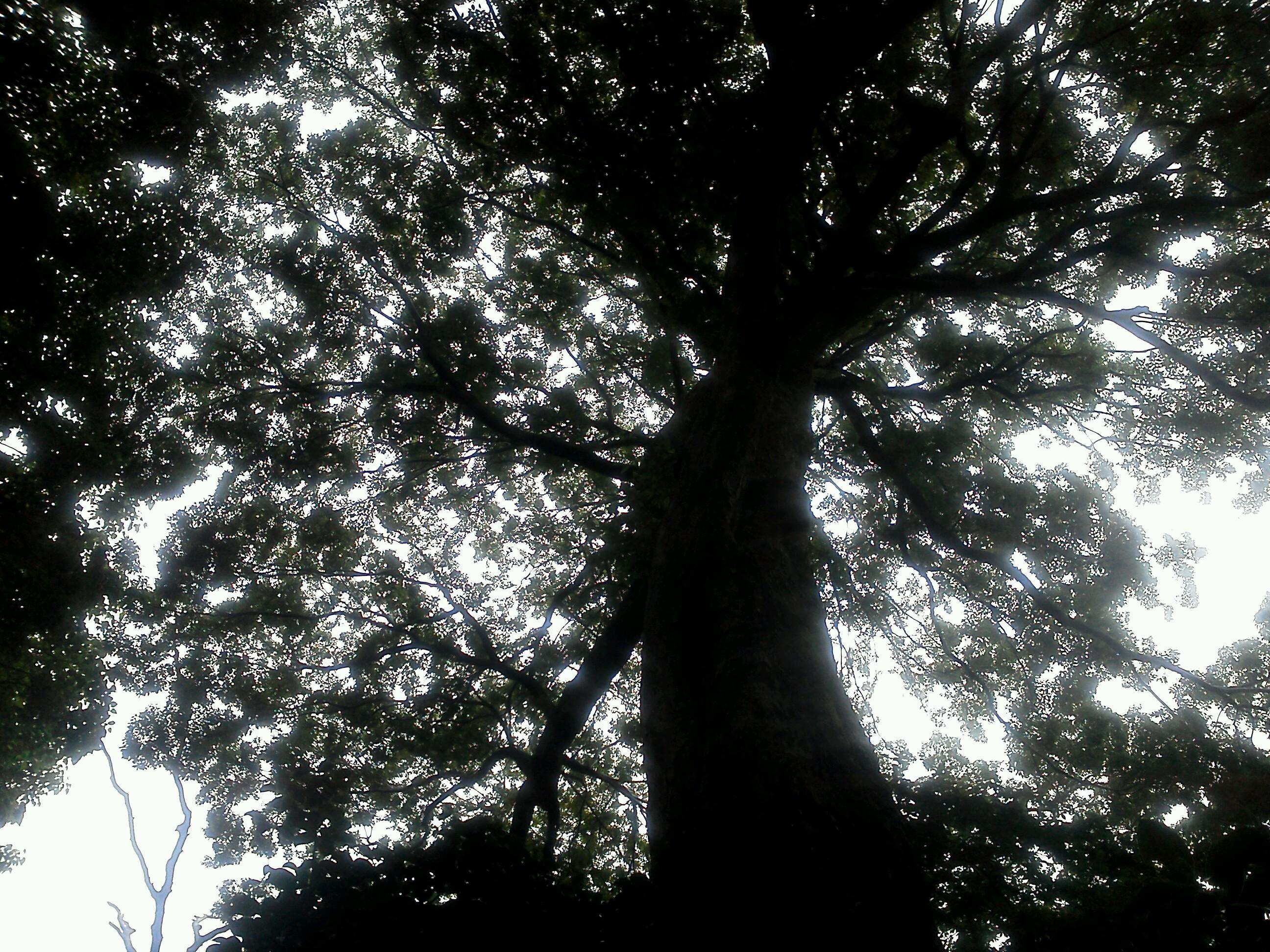 自然公園 大木公園