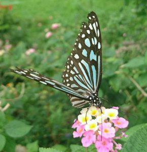 青い蝶と花